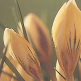 clip_image001(24).png