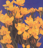 clip_image001(25).png