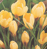 clip_image001(32).png
