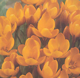 clip_image001(40).png