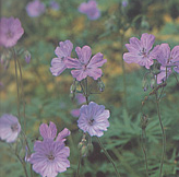 clip_image001(49).png