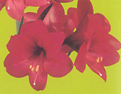 clip_image001(53).png