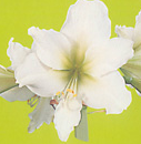 clip_image001(55).png