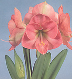 clip_image001(67).png