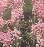 clip_image001(70).png