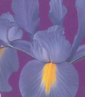 clip_image001(93).png