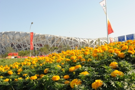 tagetes_erecta_china.jpg