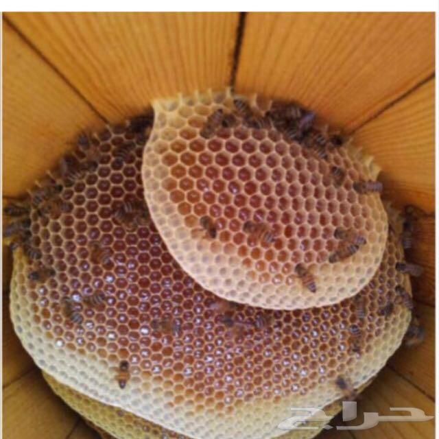 عسل سمر نتاج هذا الاسبوع