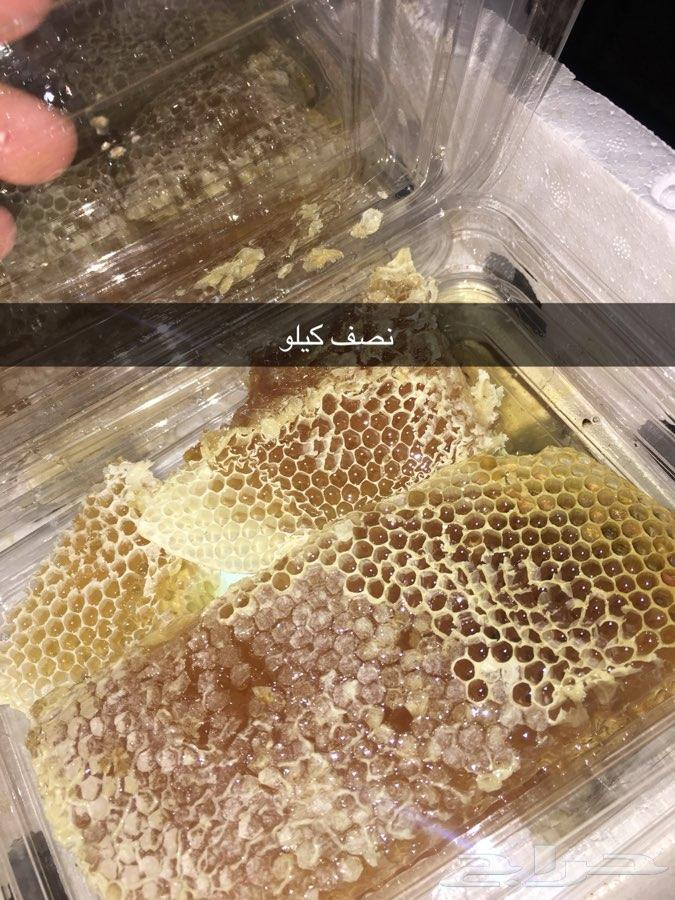 1 عسل أشجار مزارع تبوك - عسل سدر