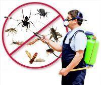 شركه تسريب المياه ومكافحه الحشرات بالدمام