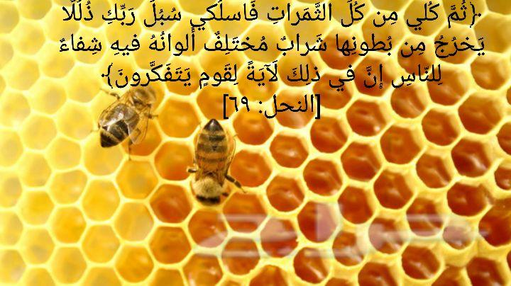 عسل طبيعي مضمون