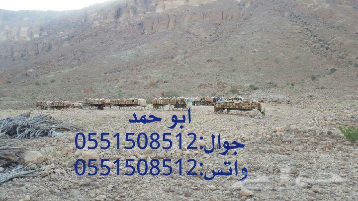 عسل سدر حضرمي دوعني 1439 اصلي وذمه توصيل مجان
