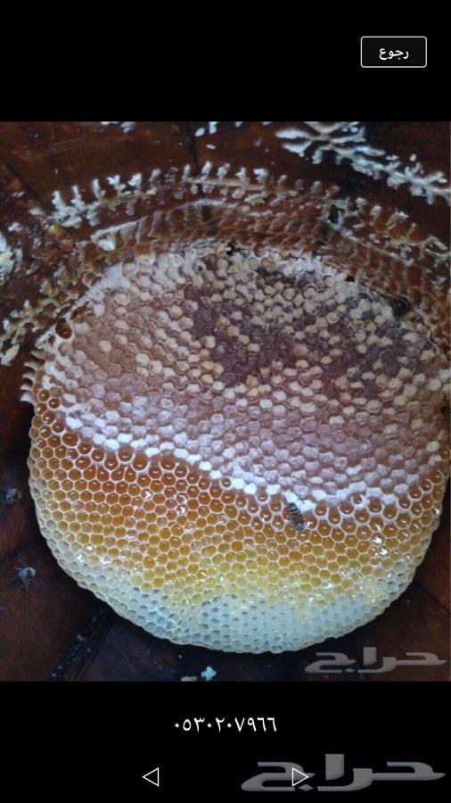 عسل سدر وعسل طلح وعسل سمره