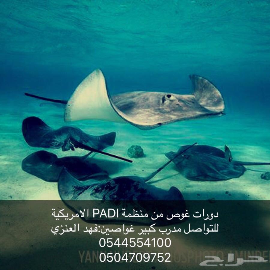 دورات غوص من منظمة PADI الامريكية
