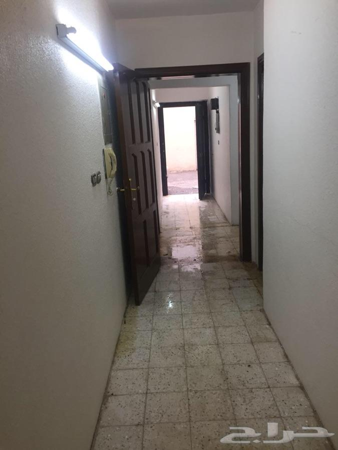 شقة عوايل 3 غرف شارع التلفزيون