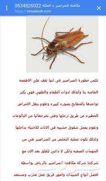 أفضل شركة لمكافحة الحشرات
