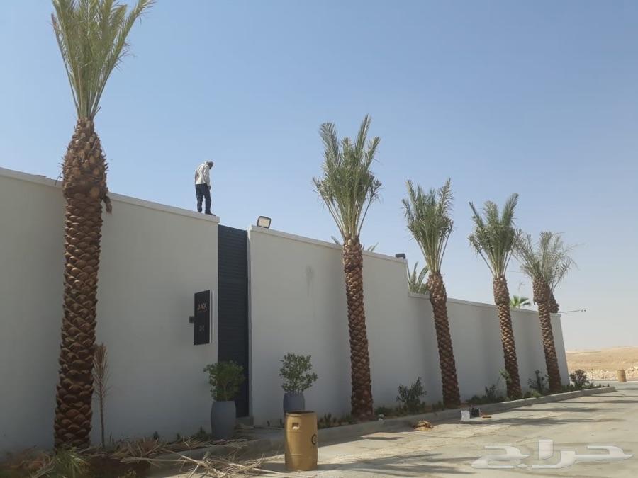 صدام حسين في الرياض