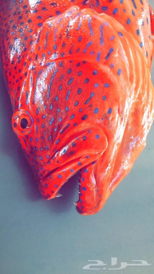 سمك اليوم