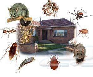 شركة مكافحة حشرات ( رش مبيدات )