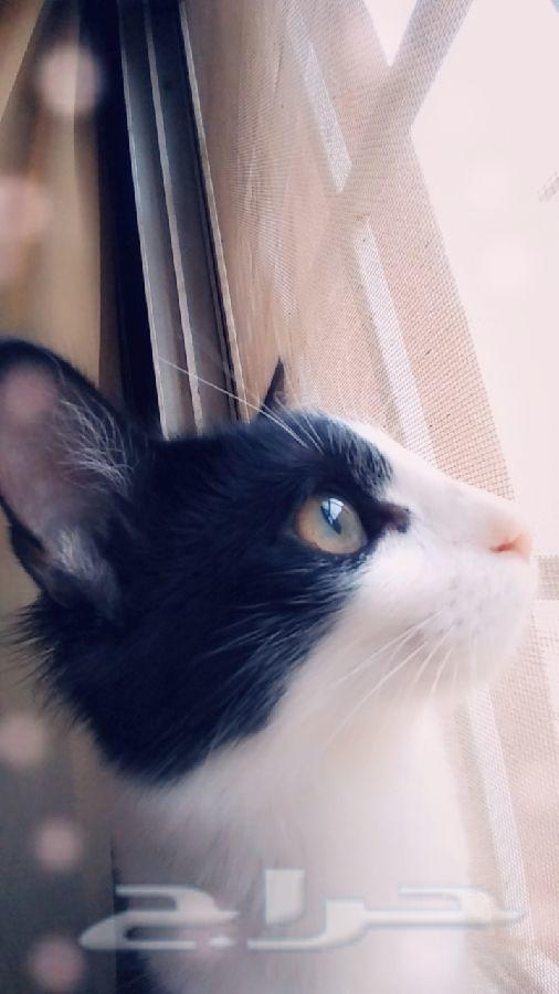 »  قطوه للتبني