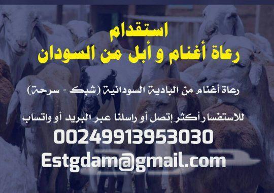 »  رعاه اغنام من السودان 00249913953030