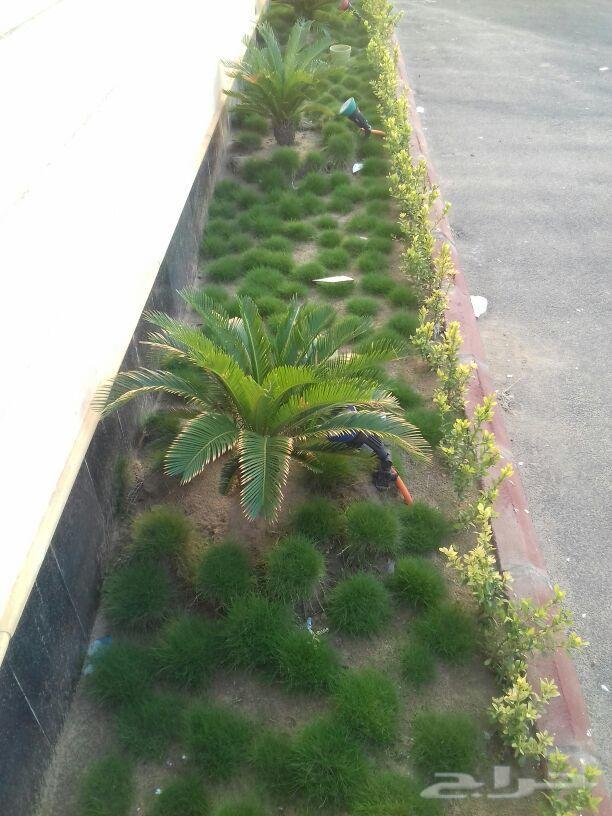 العشب الصناعى والطبيعى وتنسيق الحدائق