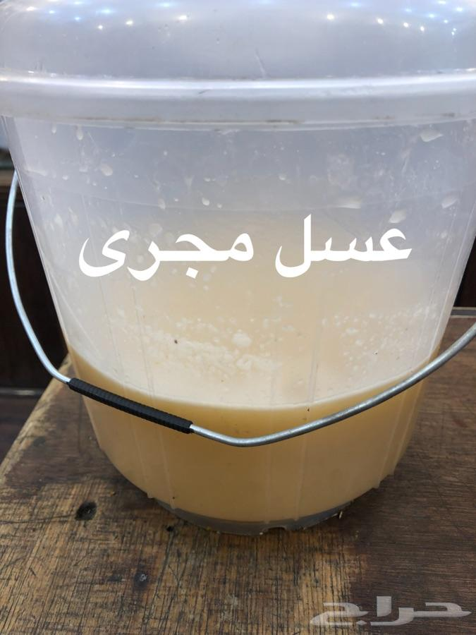عسل سدر جبلي وعسل سمره مضمون 100