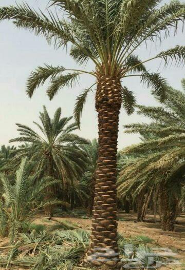 ابو حبيب المزارع لتنسيق الحدائق
