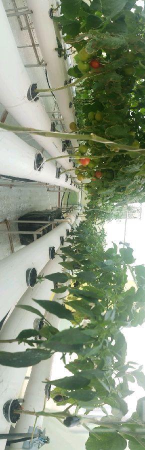 للبيع محاليل الزراعة المائية