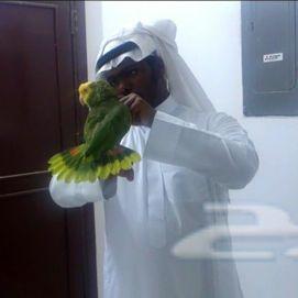 عرض فندقة طيور الببغاء الاقوى