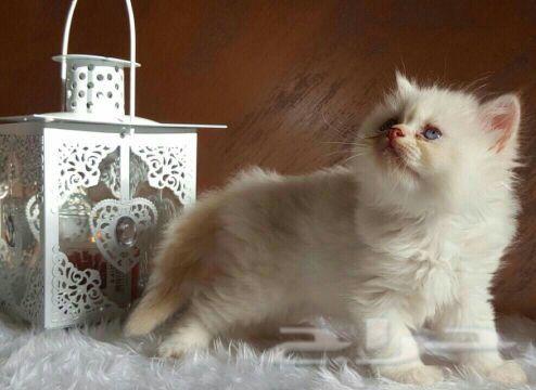 قطط جميله