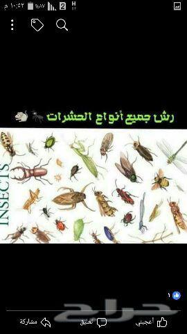 شركة رش مبيدات ومكافحة الحشرات بالمدينة المنو