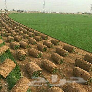عشب طبيعي وعشب صناعى للمساحات الكبيرة