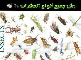 تركيب طارد الحمام ورش حشرات بالمدينة المنورة