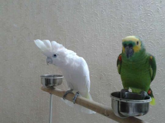 نحنوا جاهزون للتلقي استلامات الطيور من البيوت