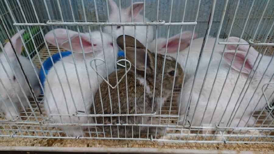 ارانب و هامستير تقدم هديه