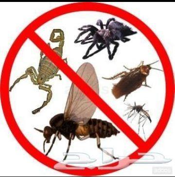 نظافة خزانات وشقق ومكافحةحشرات بجدة