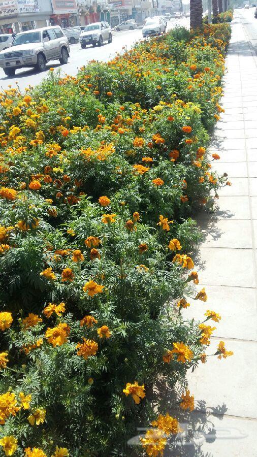 تنسيق حدائق وملاعب وعشب جداري شلالات ونوافير