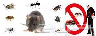 شركة مكافحة حشرات رش مبيدات الصراصير البق