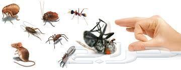 شركة مكافحة حشرات بابها خميس مشيط رش حشرات