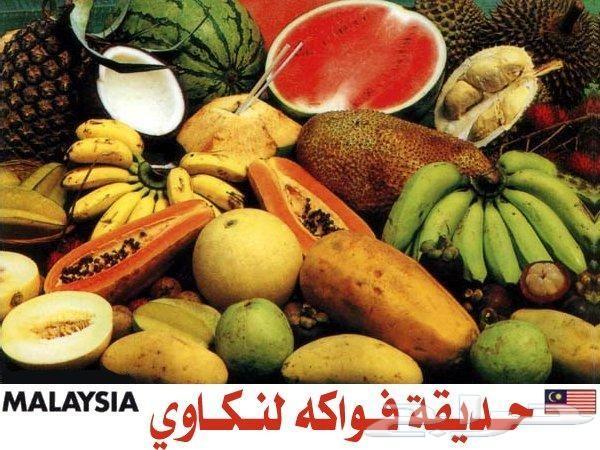 عرض شهر عسل 5نجوم اقتصادى بماليزيا لمدة11 يوم