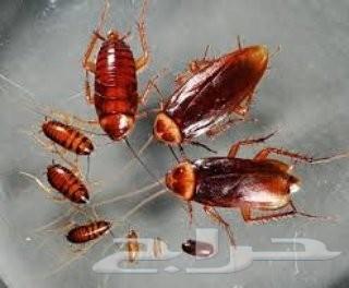 شركة رش مبيد رش مبيدات مكافحة حشرات