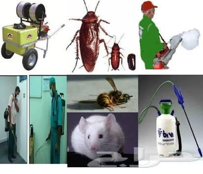 رش مبيدات رش دفان مكافحه حشرات تنظيف شقق فلل