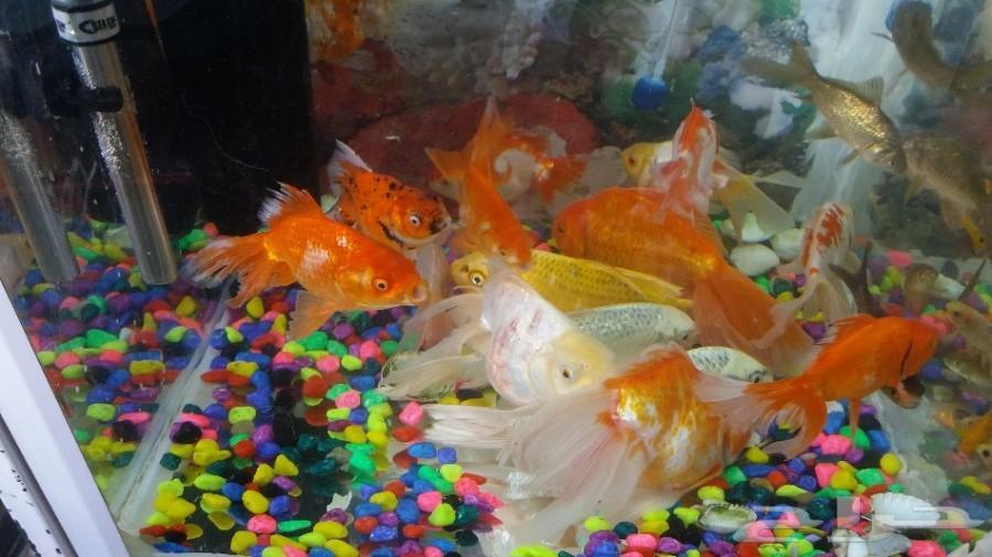 دفعة جديدة سمك وسلاحف باقل سعر وصلت اليوم