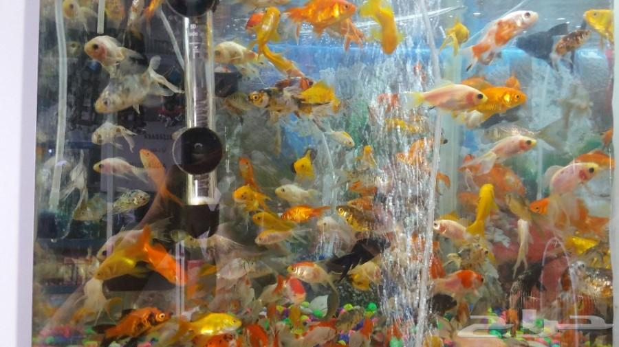 دفعة جديدة سمك وسلاحف