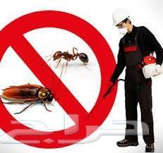 شركة مكافحة حشرات شركة مكافحة حشرات بالرياض