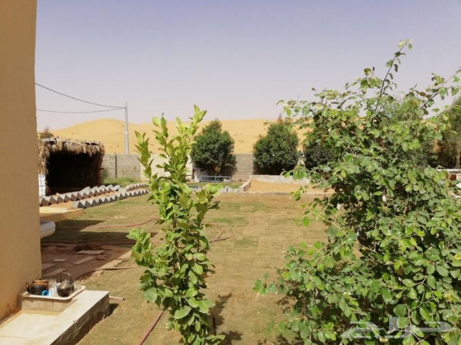 مزرعة للإيجار والبيع في أم شيح شرق الأسياح