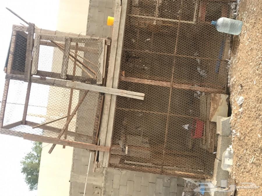 حمام بكستاني