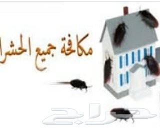 رش مبيد رش حشرات البيوت صراصير نمل فران برص