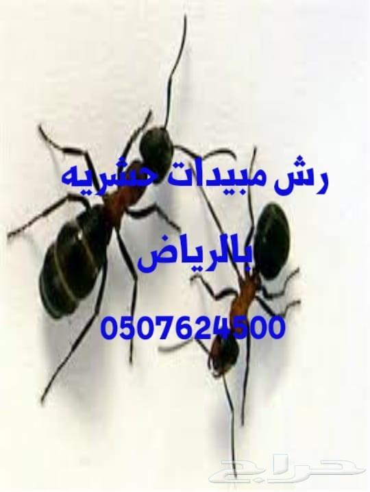 رش مبيد حشرات النمل الصراصير تنظيف كنب سجاد